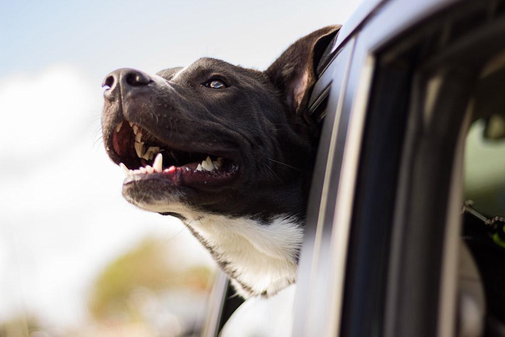 viajar-con-mascota-seguro